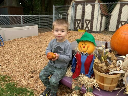 Pumpkin Patch 3
